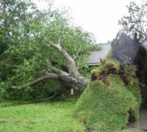 A Legal Perspective On Neighbors And Disputes About Tree Damage