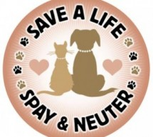 Spaying Or Neutering Your Cat