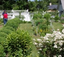 Natural Ways To Keep Common Pests Out Of Your Organic Garden