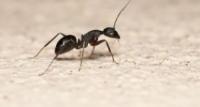5 Tips For Controlling Pests