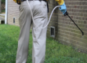 Various Important Steps For Eradication Of Pests From Your Place