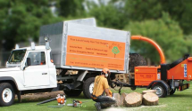 Experience A Closer Look At The Nature's Splendor With Tree Surgeons Caterham