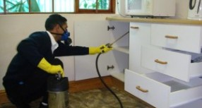 Effective Tips Before Hiring An Islington Pest Control Service