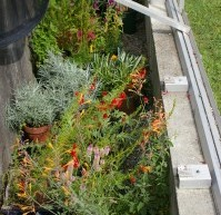 Working With A Cold Frame