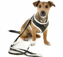 The Benefits Of A Dog Harness