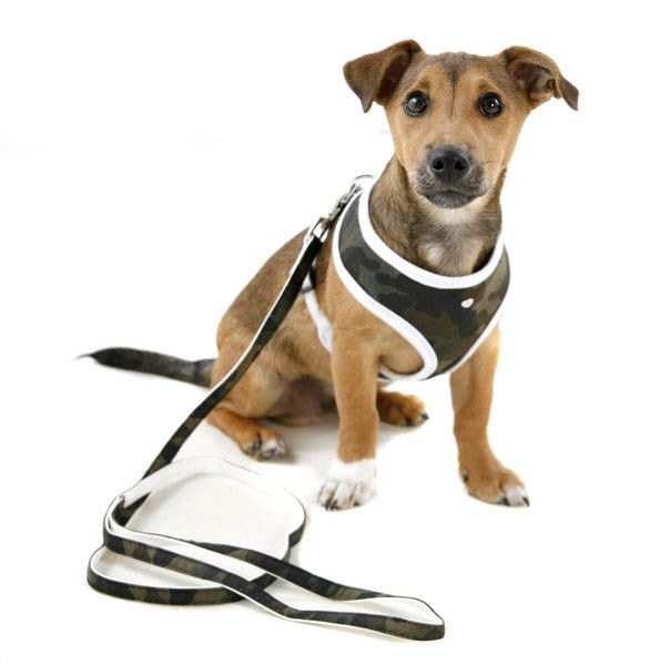 How To Put On A Dog Collar Harness