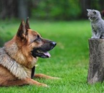 Pet Insurance: Ensuring The Safety Of Your Best Friend