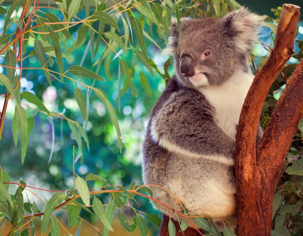 Mindful Travel Into The Very Nature Of Australia