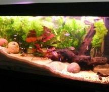 Home Aquarium Resources – The Simple Tips That Make All The Difference