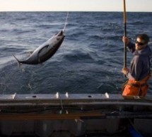 Preparing Your Catch: Tuna
