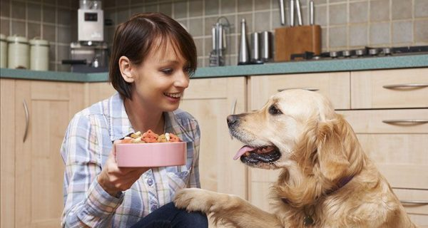Tips For Choosing Dry Dog Food