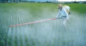 Different Chemicals Used In Pesticides And Their Safe Use