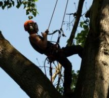 Reasons For The Popularity Of Tree Surgeons In Ruislip