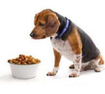 6 steps to improve your dog's diet today